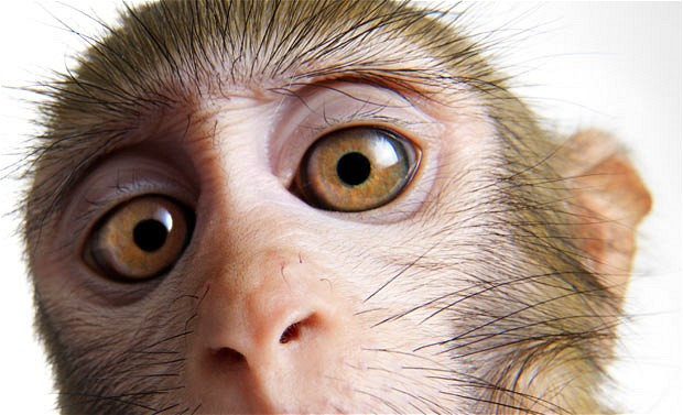 monkey-close-up_2025861i